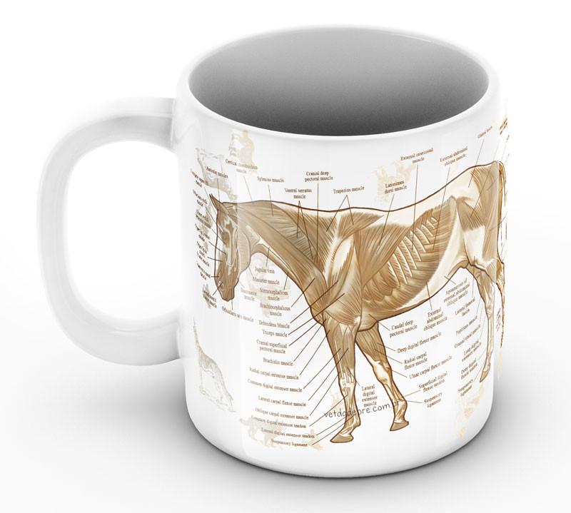 anatomia cavalo
